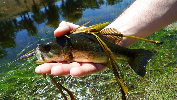 There were a lot of bass in jackrabbit lake. David caught tons of them but nothing big enough to be worth eating.