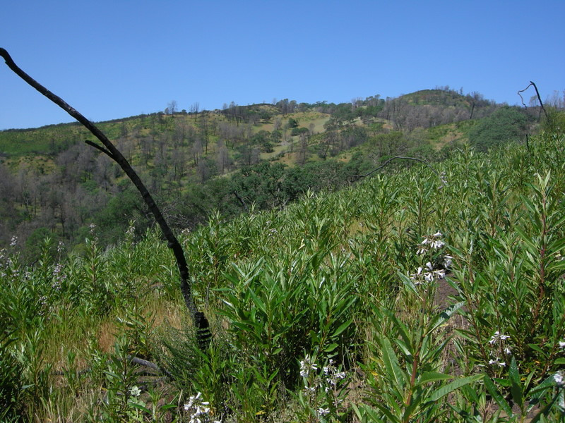 We headed up the Alquist trail from Orestimba Corral and into the area that burned in 2007
