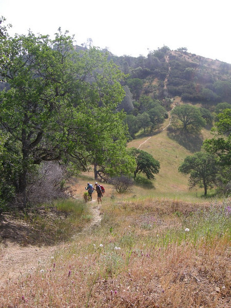 The steep and narrow trail we take out - Hartman Trail