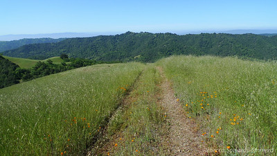 Almost done with the climbing to Phegley Ridge. Great views all around now.