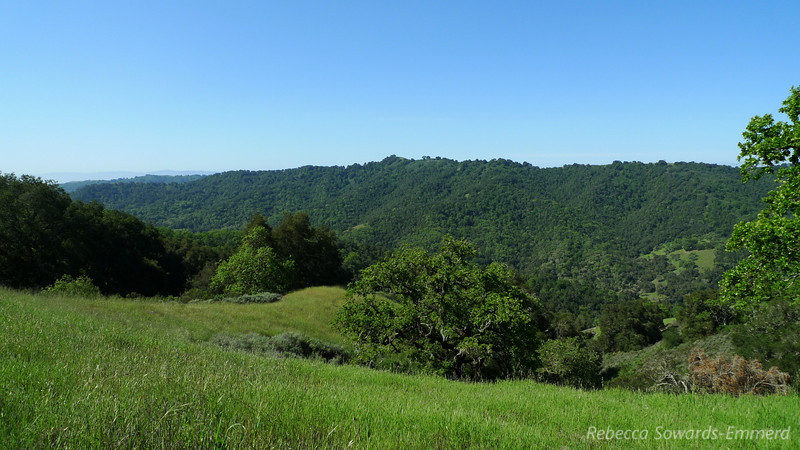 Across at Bill's Hill. Still need to get up there but tales of Poison Oak have kept me away.