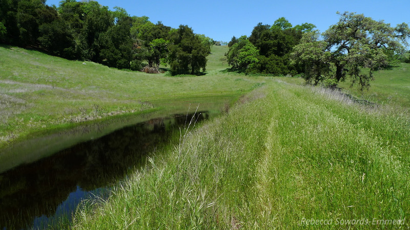 I cut over to Vasquez Road using the infrequently visited Long Dam Trail. High grasses made me sneeze and itch.