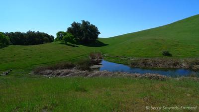 Redfern Pond
