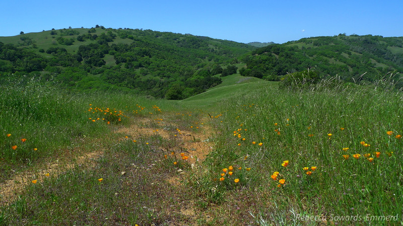 Poppies and wildflowers everywhere!