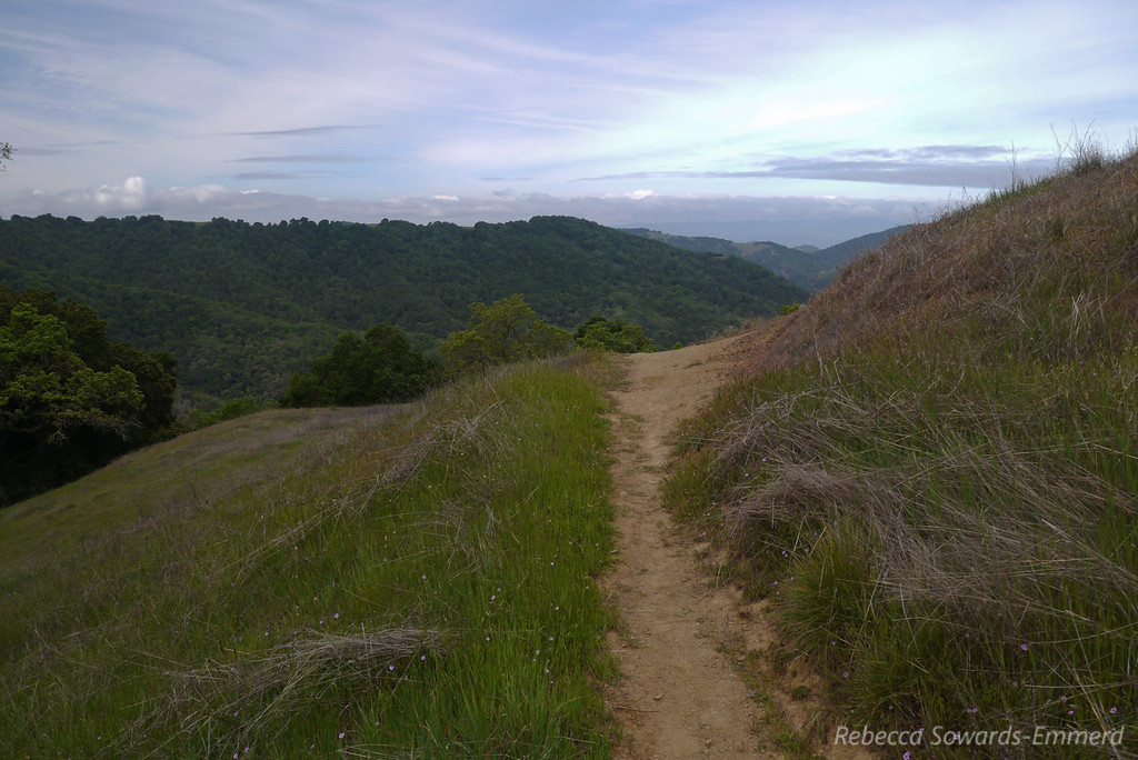 Hiking up the Lyman Wilson Ridge trail to Wilson Camp