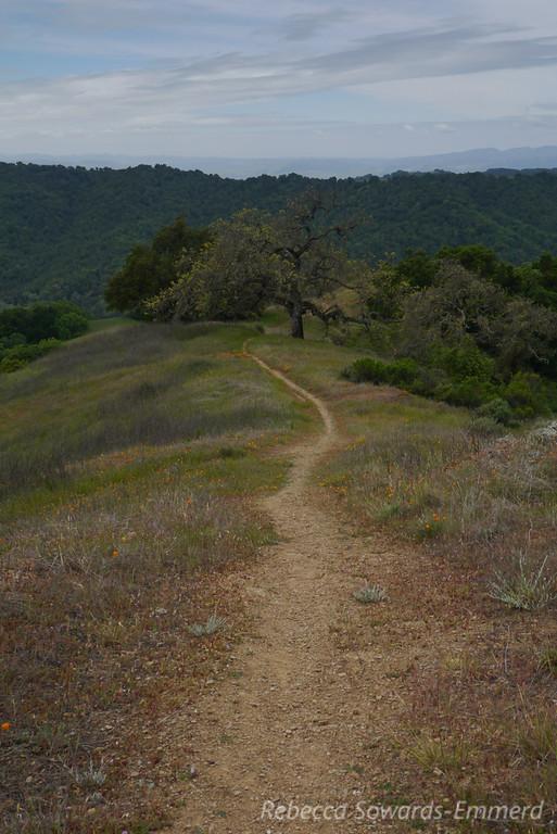 Lyman Wilson Ridge trail