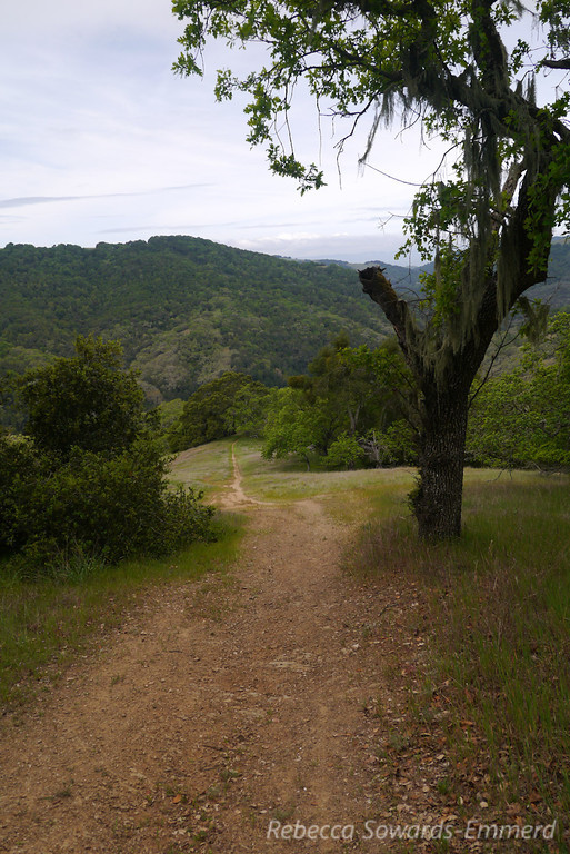 Hiking up the Lyman Wilson Ridge trail to Wilson Camp