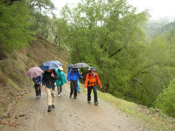 The group begins the hike in the rain.
