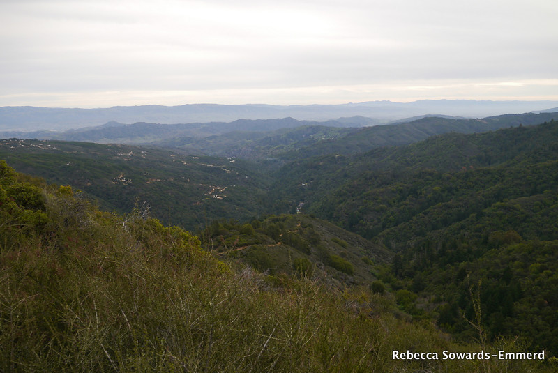 Looking back down on Uvas Canyon.