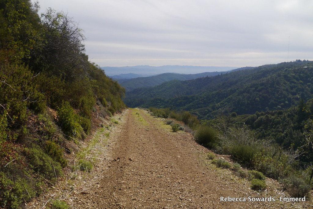 Heading down. I like trails made of old roads - they are wide enough that poison oak isn't a problem.
