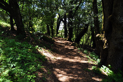 Ridge Trail - starts in shade