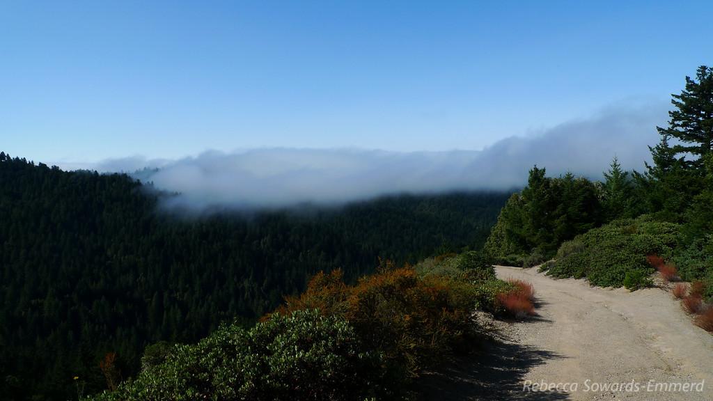 Fog hanging over the redwoods.