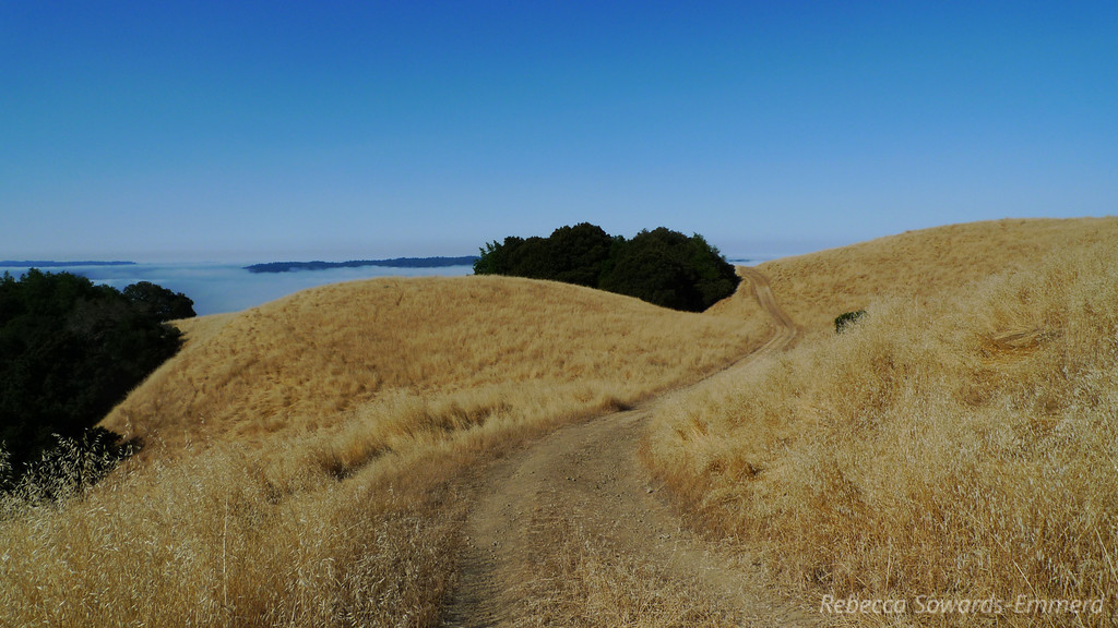 I only spend a couple of miles in this terrain - I'm heading down this road into the redwoods below.