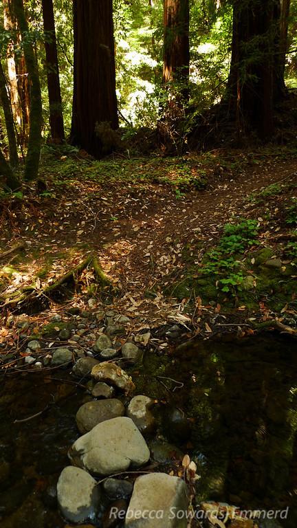 Along the Bear Creek Loop Trail