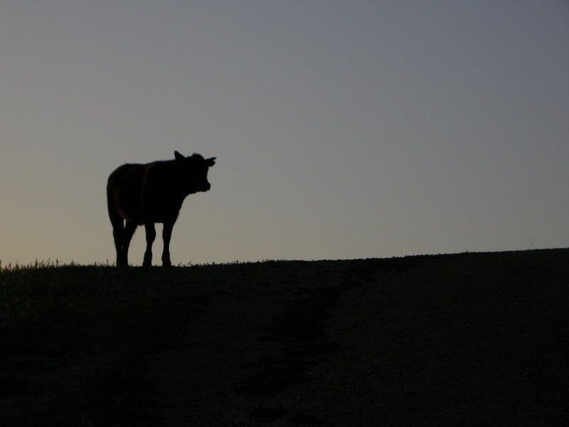 A bovine local greets us near the beginning of the climb.<br /> <br /> Moo
