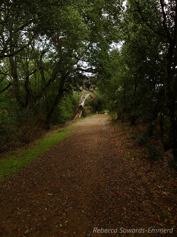 On the Canyon Trail