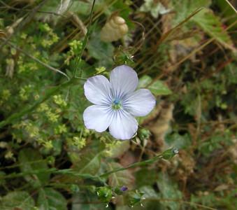 ? flower, Point Lobos