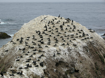 All these cormorants were on nests.