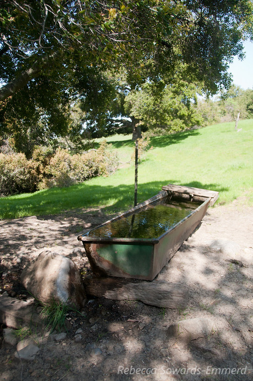 Watering trough. Lots of cattle roaming around this park.