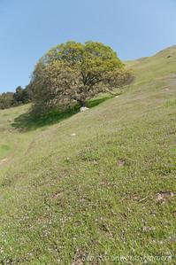 Field of filaree
