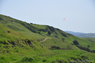 Lots of gliders out today.