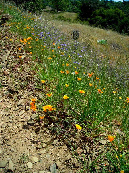 At least I have some nice wildflowers along the way.