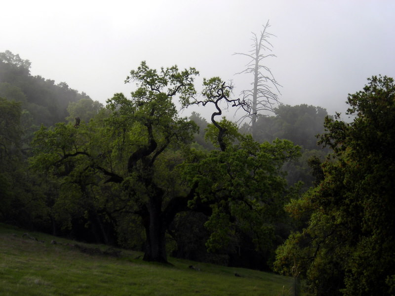 Morning fog<br /> <br /> I started my hike at 8:15 am as the morning fog cleared off and the sun came out.