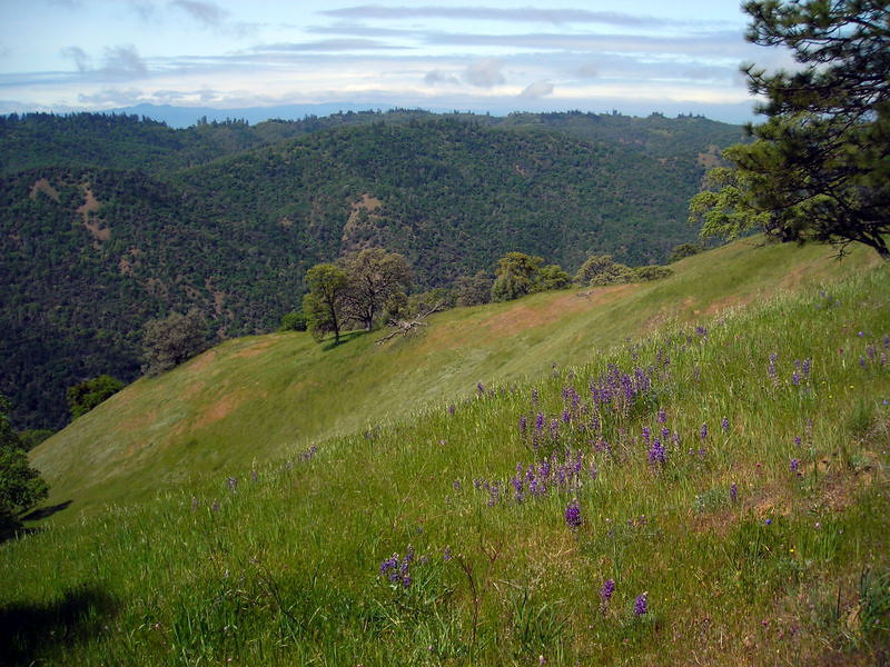 Lupines and Coe views<br /> <br /> Henry Coe trails are a lot of up and down over ridges, a couple of which can be seen in this photo.