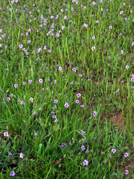 The wildflowers were starting to come out in Henry Coe.