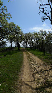 Wandering along the Blue Ridge