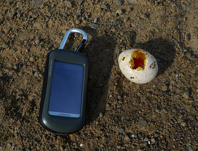 Egg we found in the middle of the trail (GPS there for scale). What is it? (thinking it's wild turkey?)