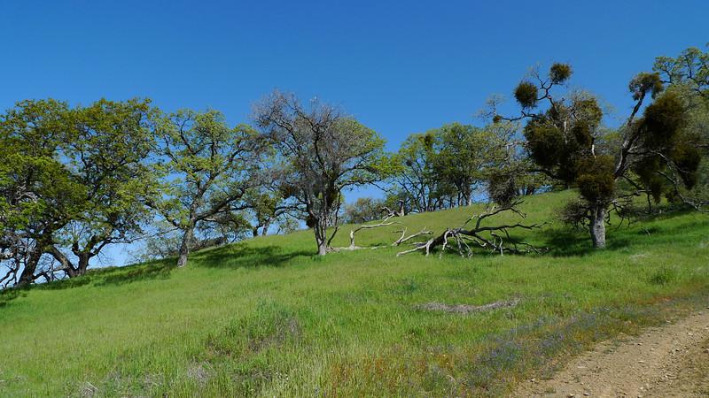 Nice oaky hills