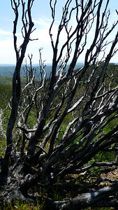 Skelton trees