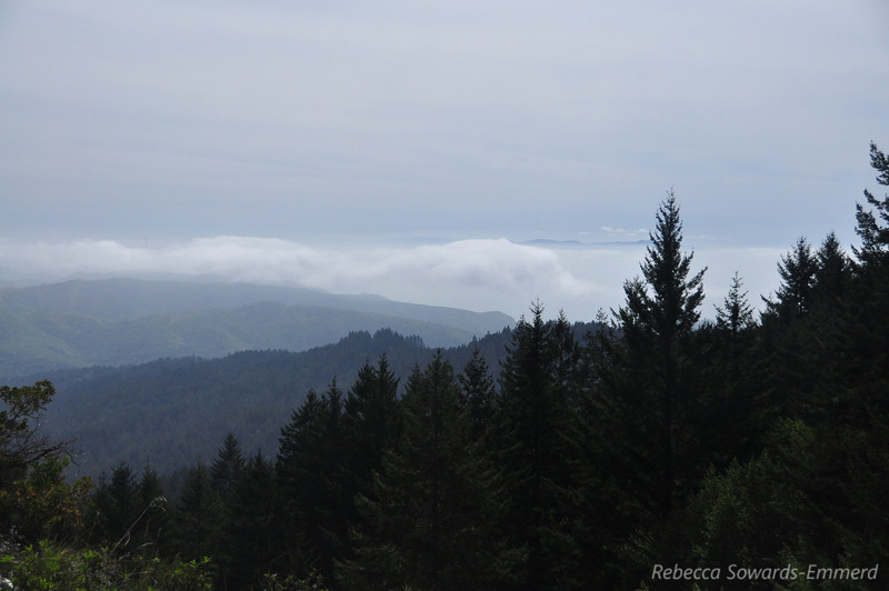 A bit of fog along the coast today but it was beautiful on the trail.
