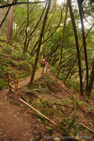 Nearing the top of the Steep Ravine trail