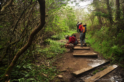 Starting up the Dipsea Trail from Mt Tam