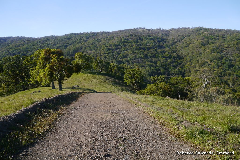 The demoralizing descent into Williams Gulch. It's only about 500 ft, but on the return trip it's not fun.