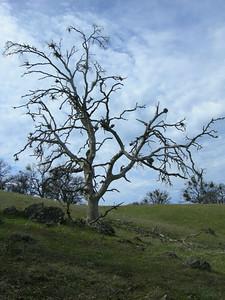 Neat tree along the trail