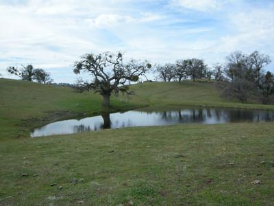 Johnny's Pond