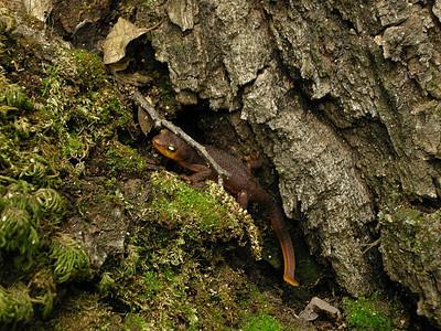 Newt in Williams Gulch