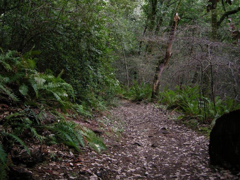 Nice cool trail.