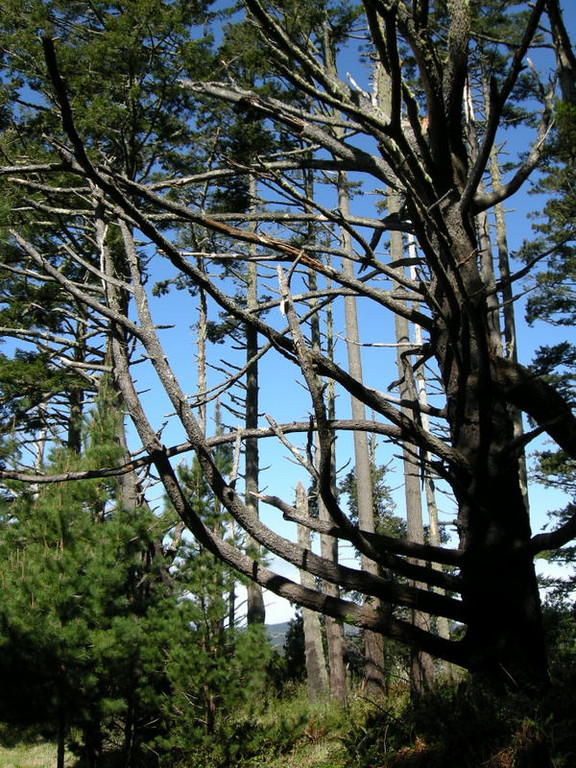 Trees on the sides of Mt Wittenberg