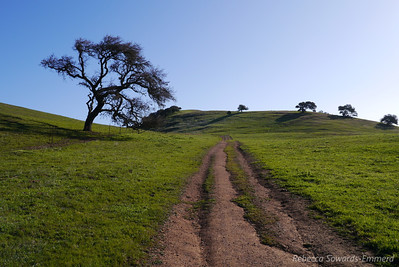 Recent rains have compacted the dirt but it isn't muddy. Perfect hiking today.