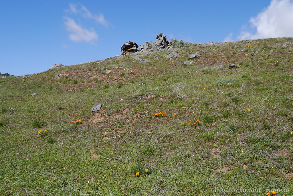We're in some rockier terrain and suddenly: wildflowers. Poppies everywhere!