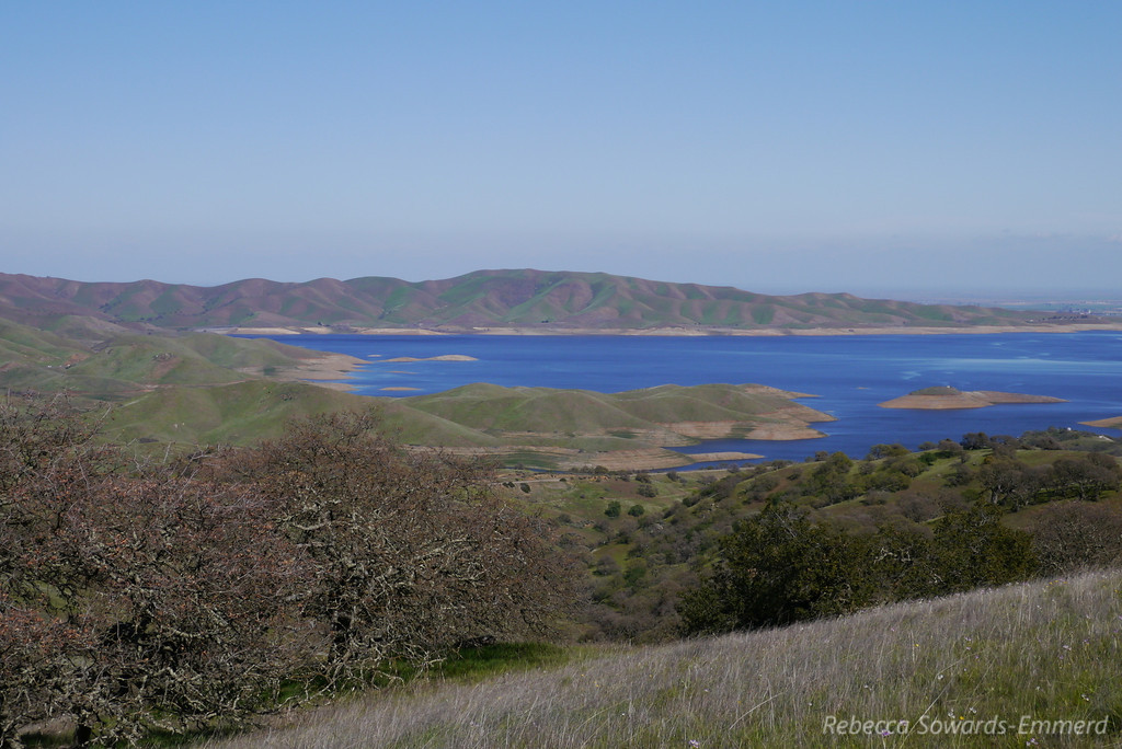San Luis Reservoir. The low levels, plus the brown south-facing hillsides show what a dry winter it has been.