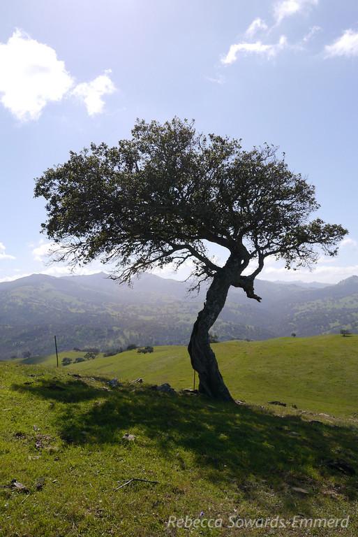 Tree on the summit of Spike's