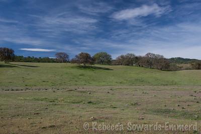 Field of filaree along Panoche Road