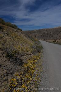 Roadside goldfields