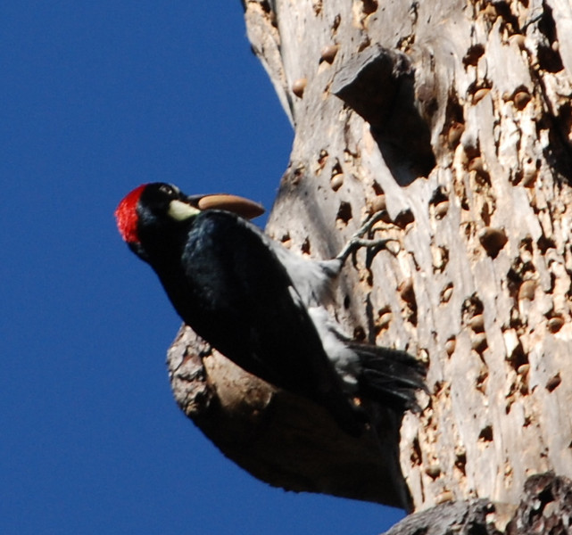 Woodpecker<br /> <br /> Photo By Dave