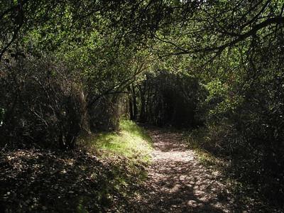 Foliage tunnel